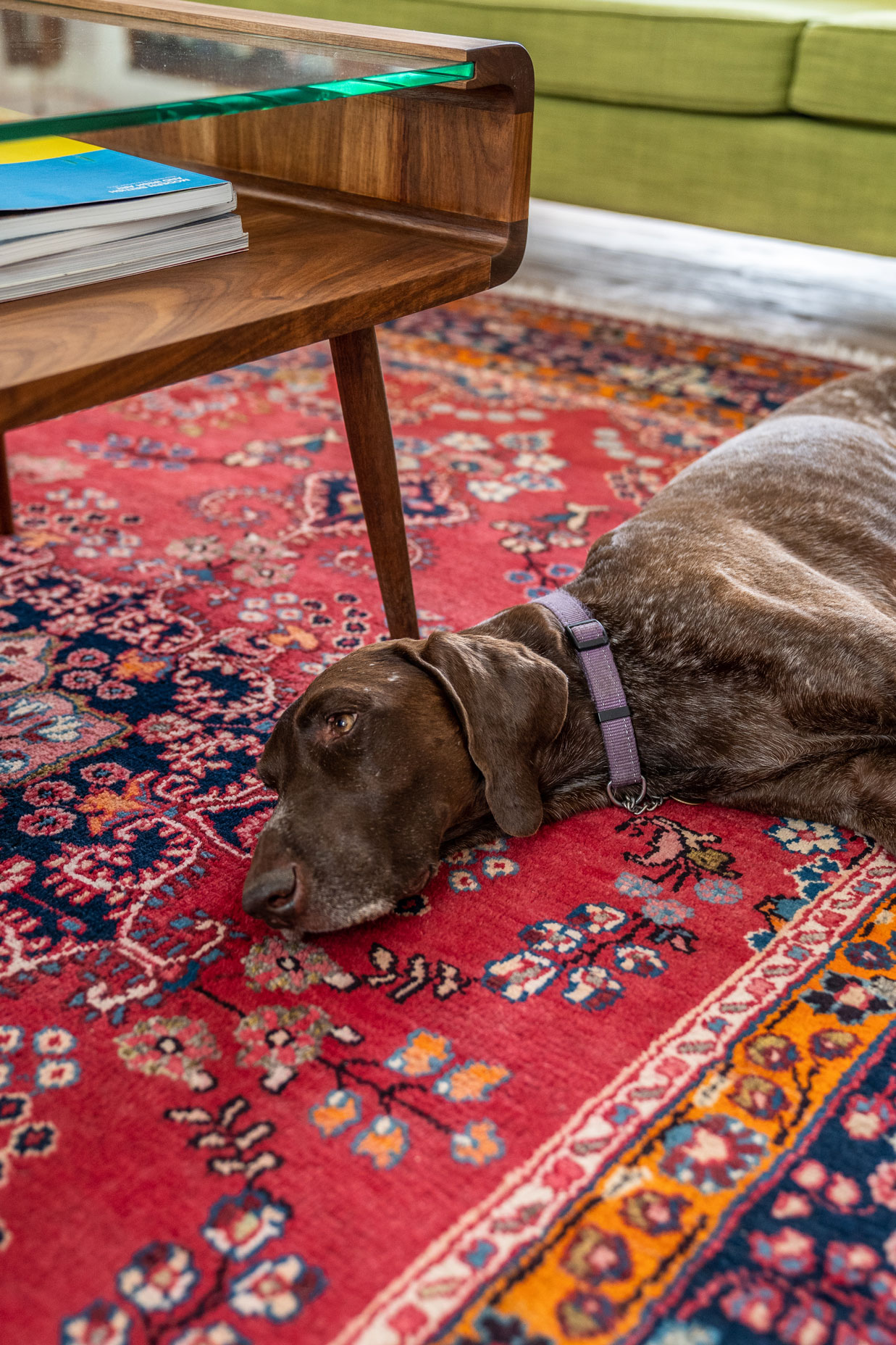 A brown dog on a red oriental carpet