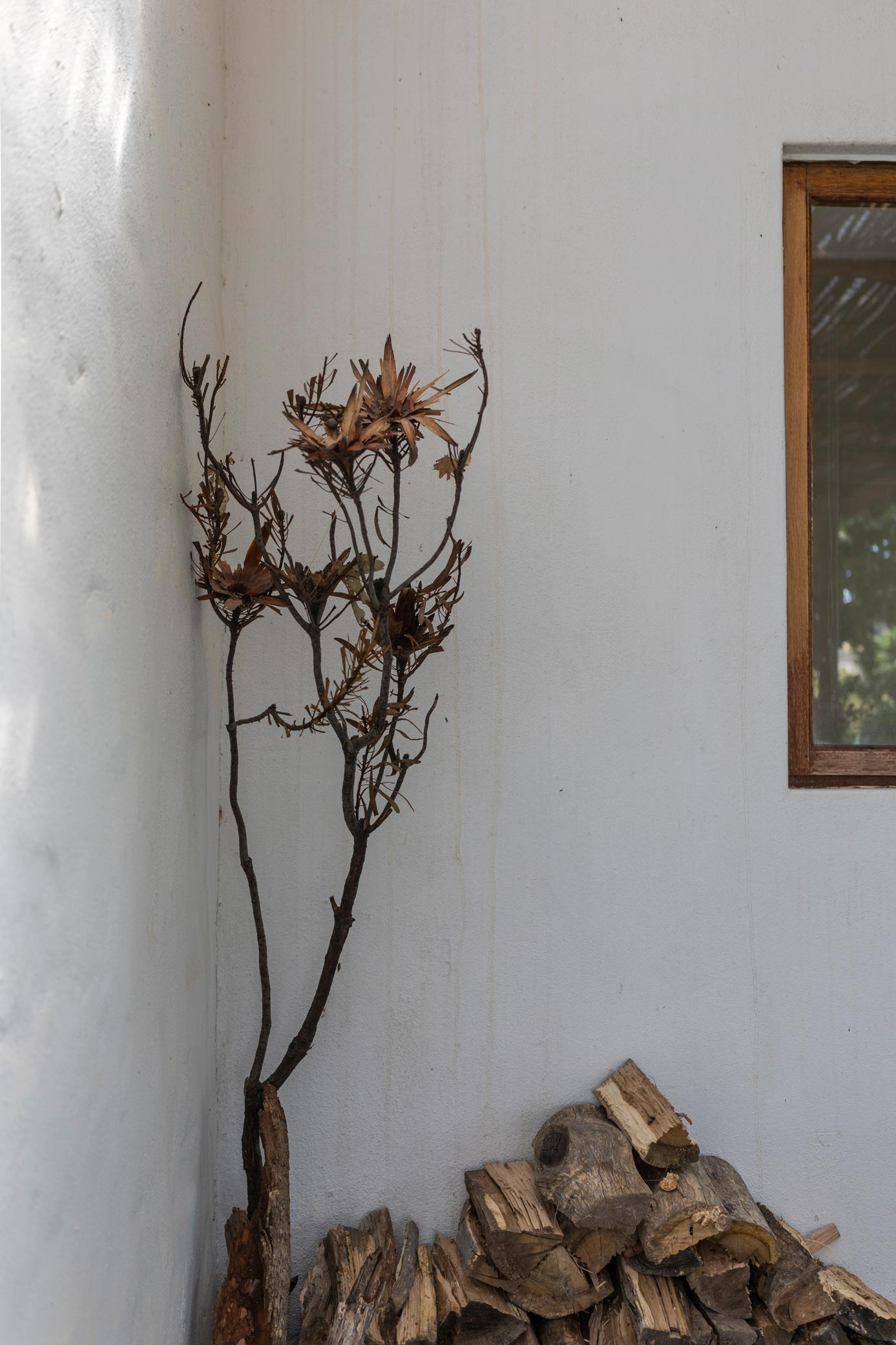 Dried fynbos and dried wood
