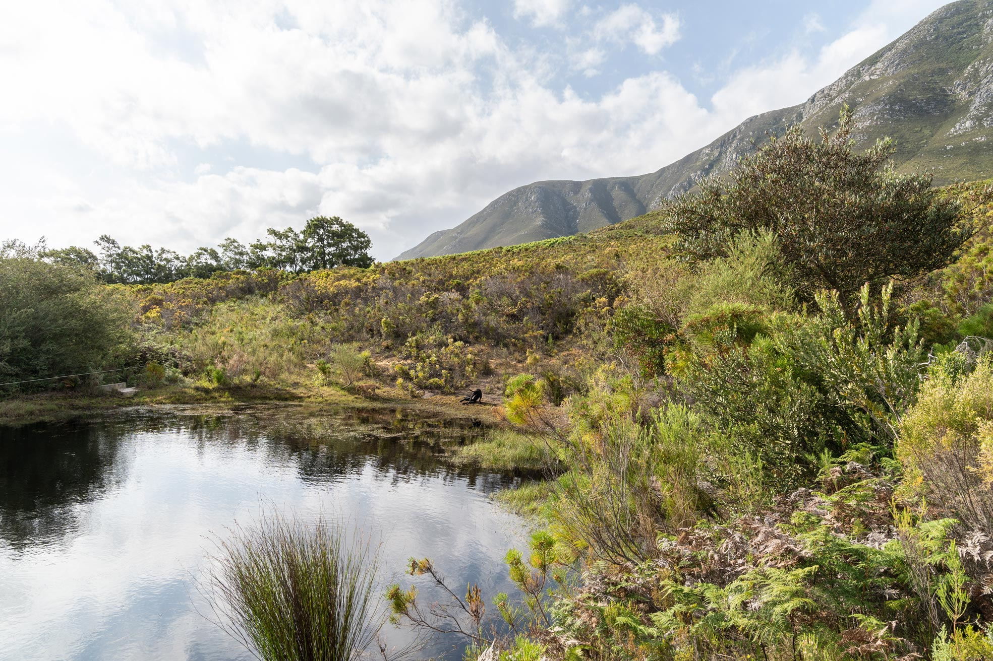 Dam on organic fynbos farm