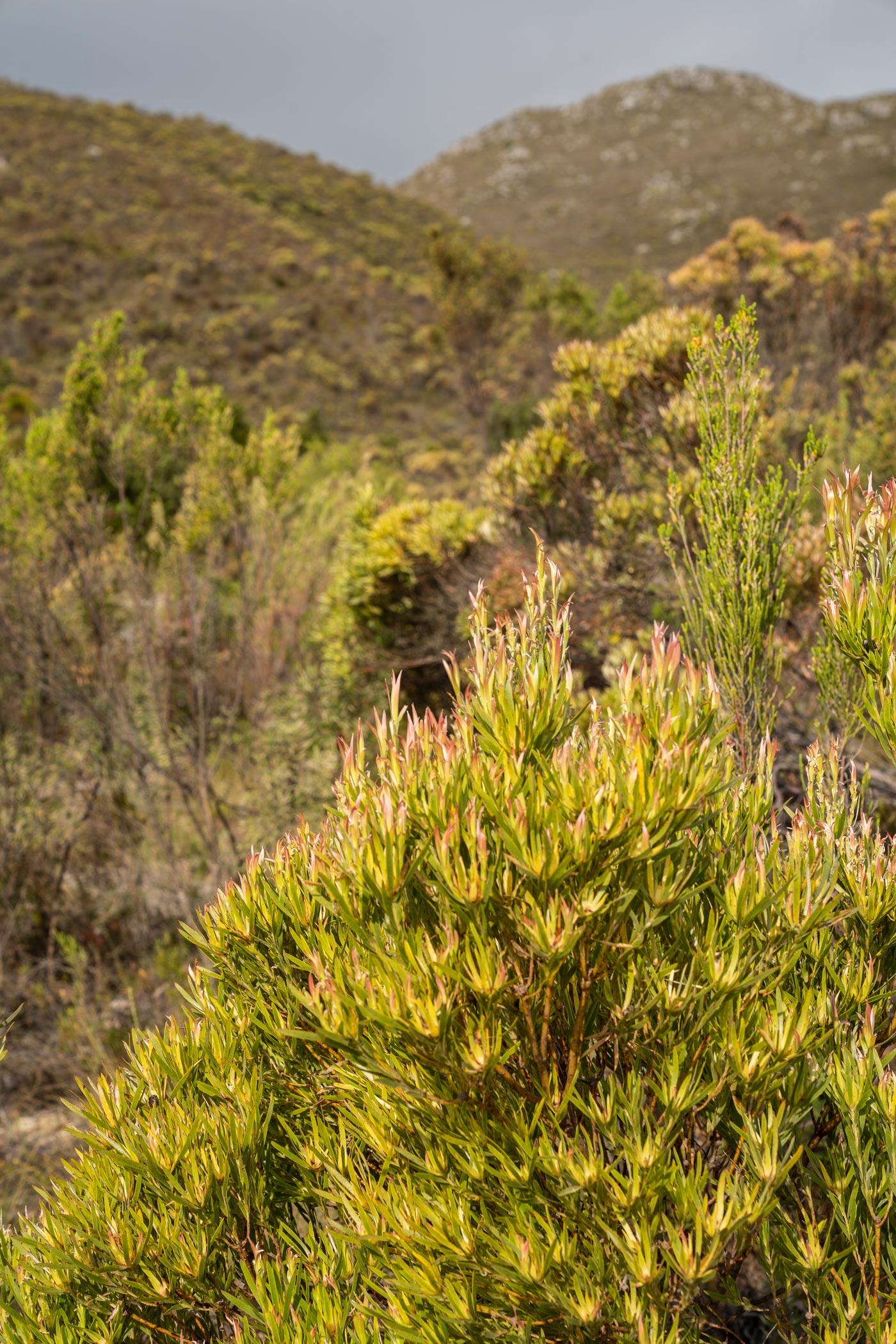 Fynbos farm in Western Cape
