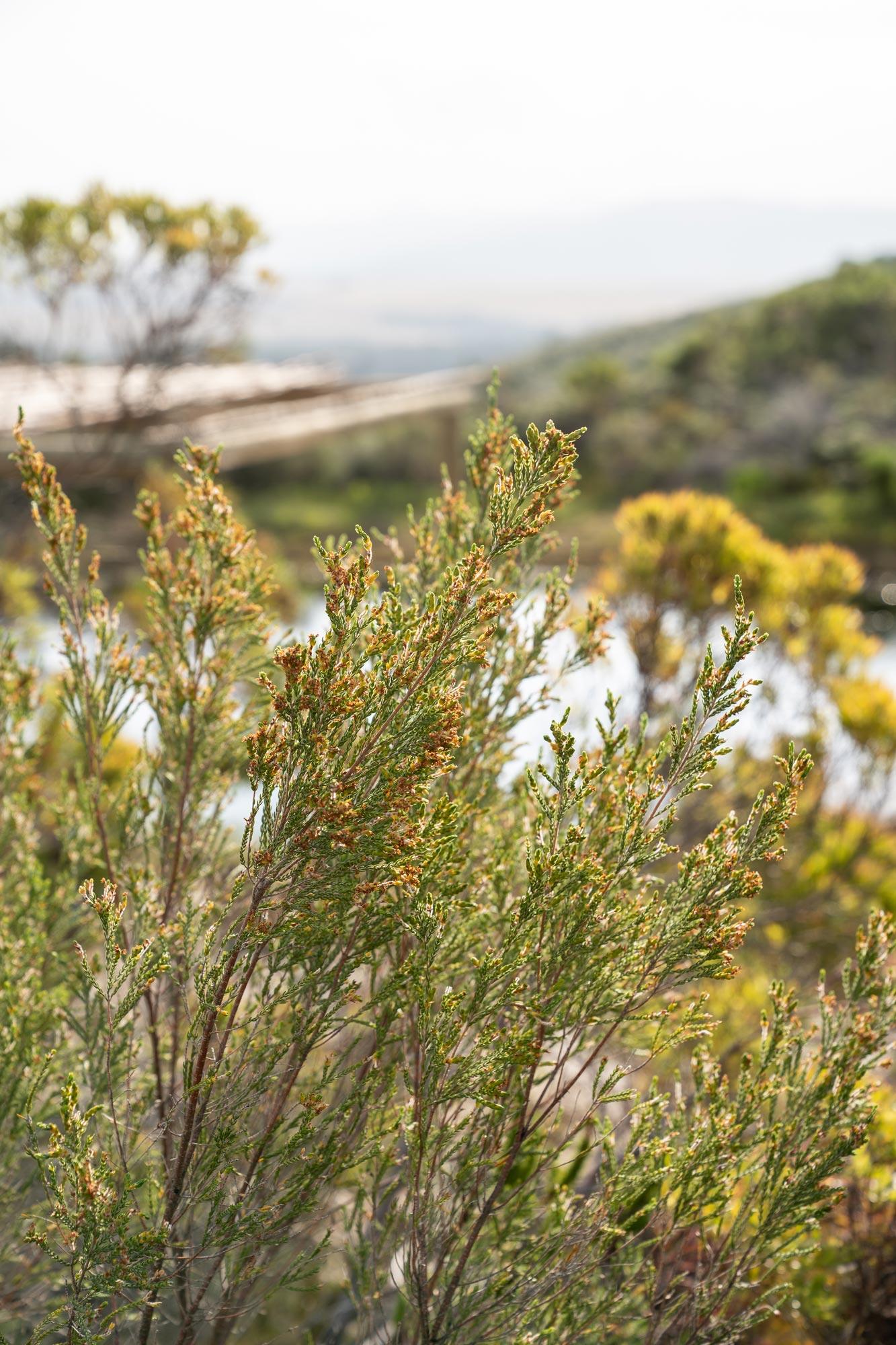Organic fynbos farm