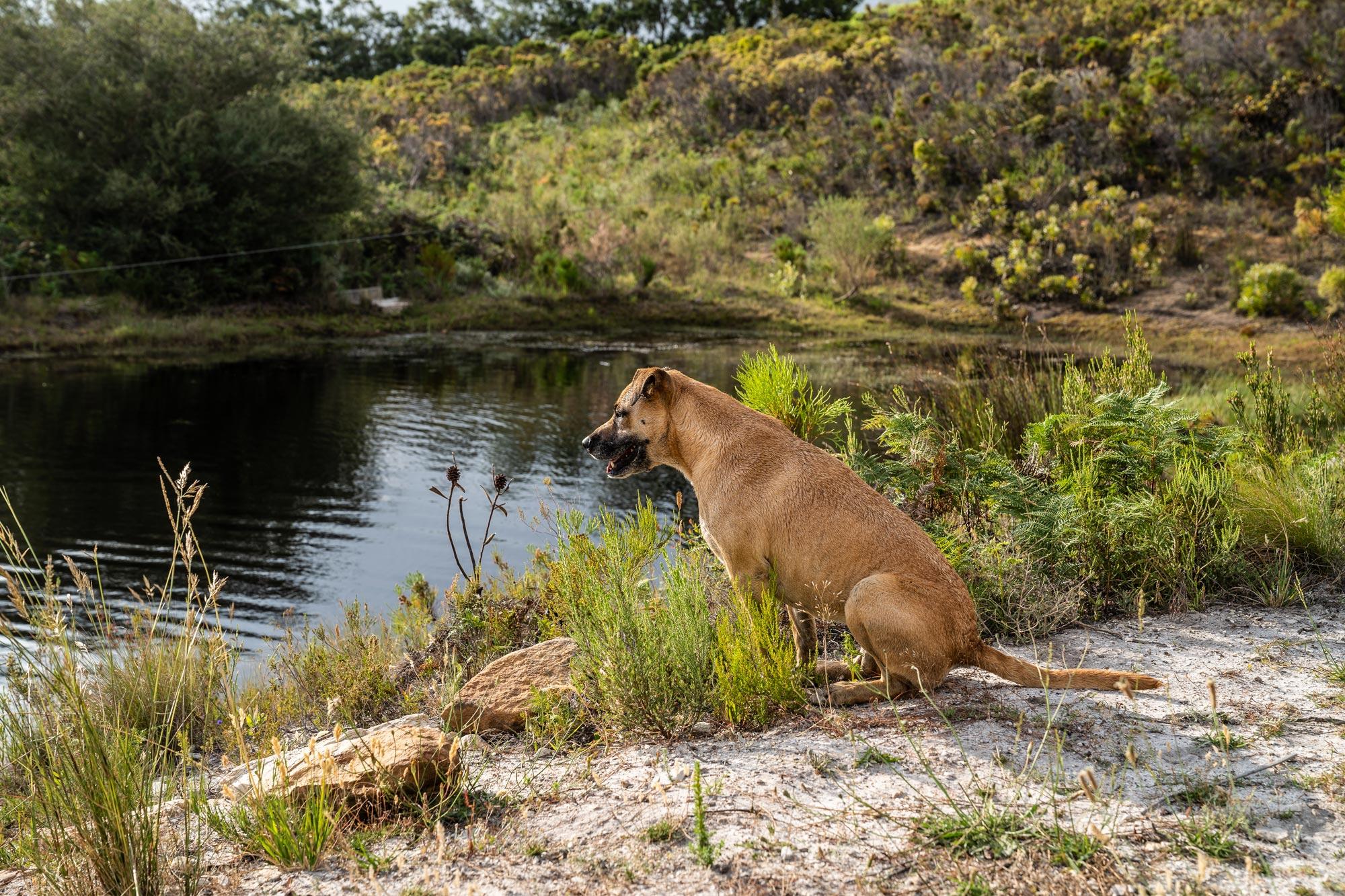 Dog sitting next to a farm dam