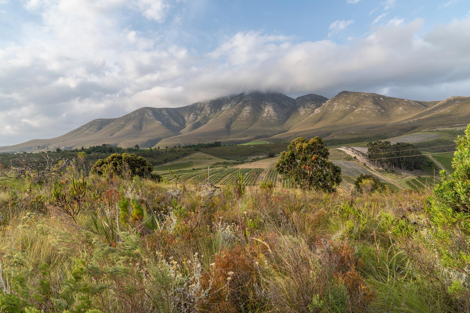 Western Cape Organic fynbos farm