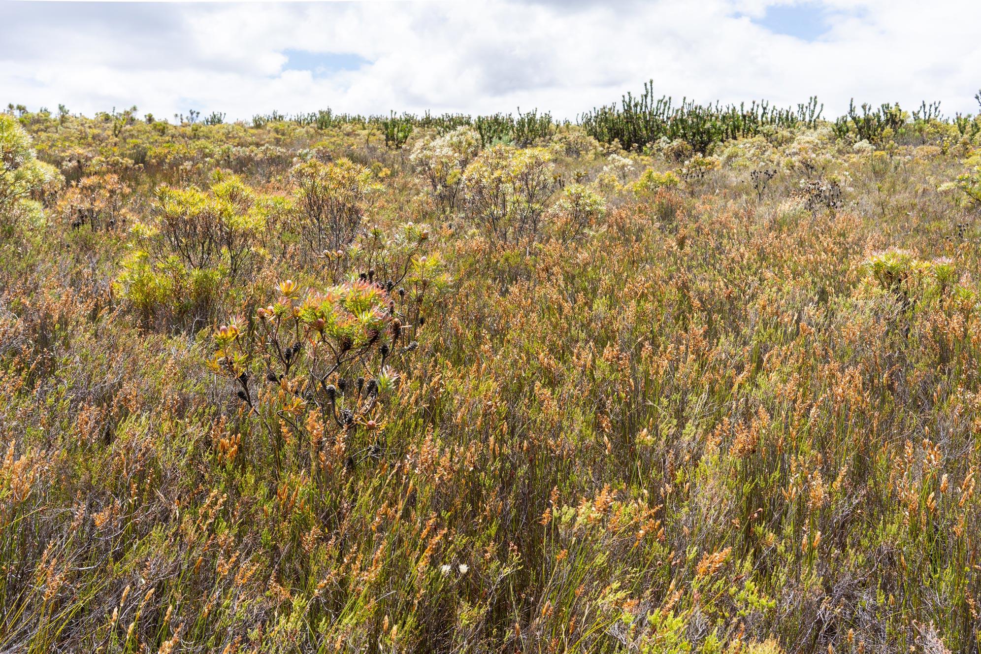 Organic fynbos farm in Western Cape