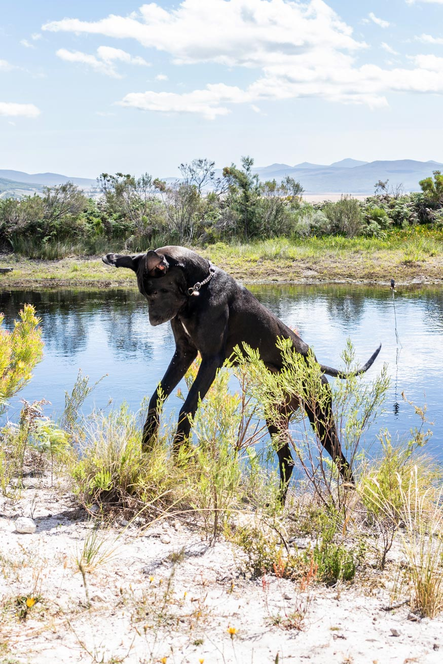 Dog playing at the farm dam