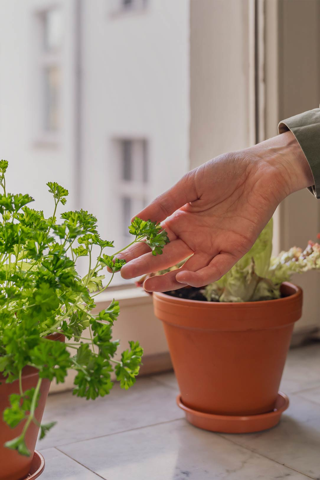 Growing food at home with Grüneo