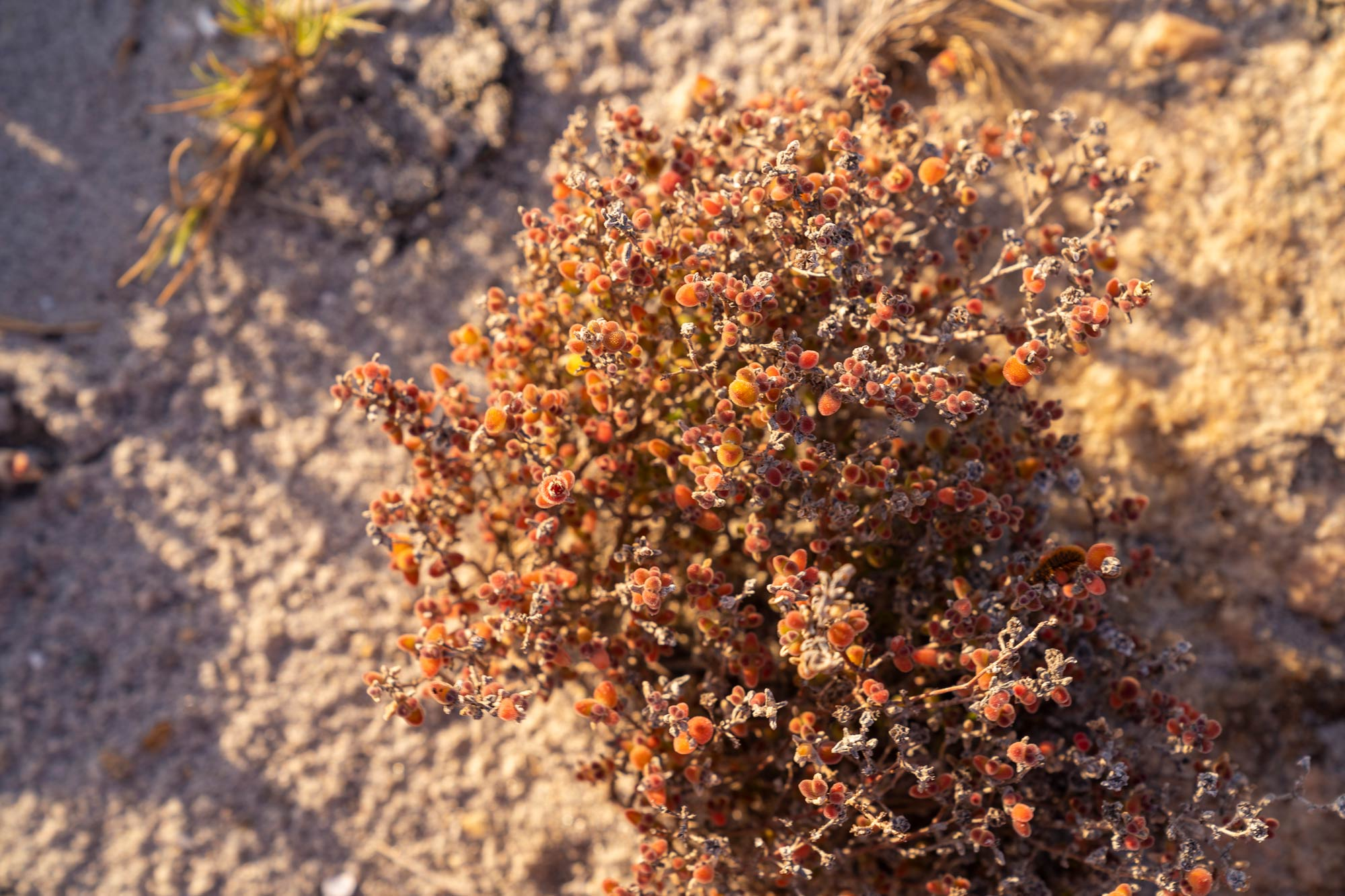 Weird and wonderful plants of the Namaqua National Park Image Copyright Soonafternoon
