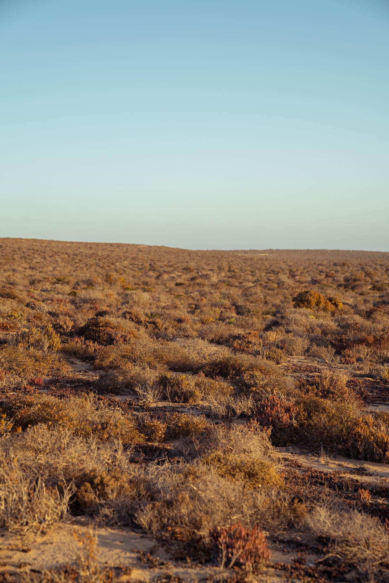 Semi desert eco region of the Nama Karoo Image Copyright Soonafternoon