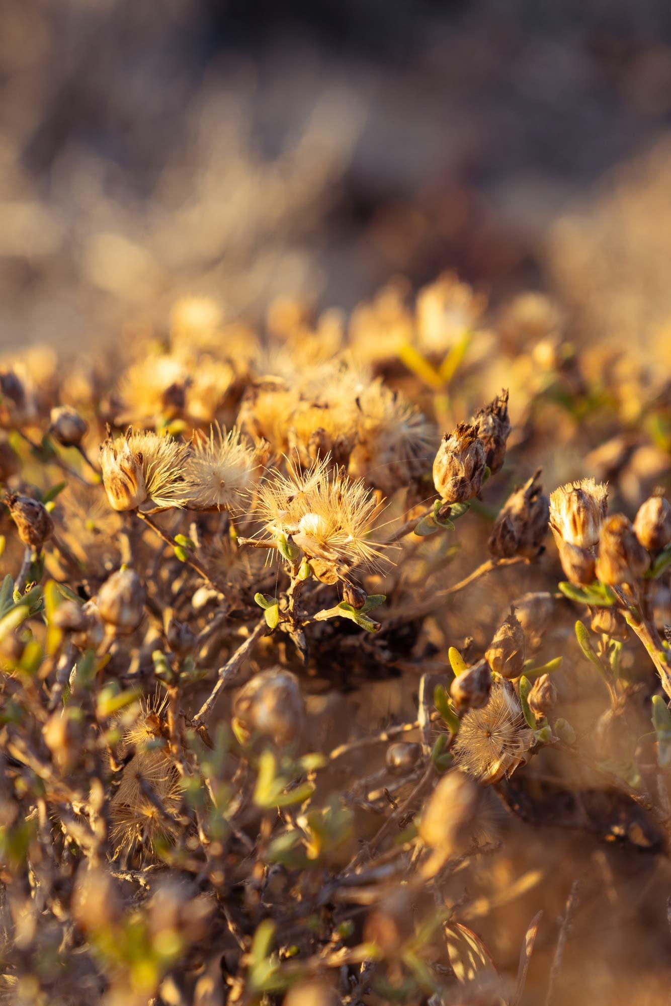 Wonderful flora of the Namaqua National Park Image Copyright Soonafternoon