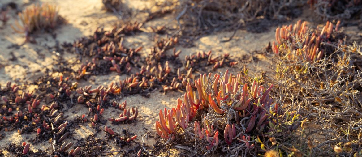 Succulent Karoo biome Image Copyright Soonafternoon