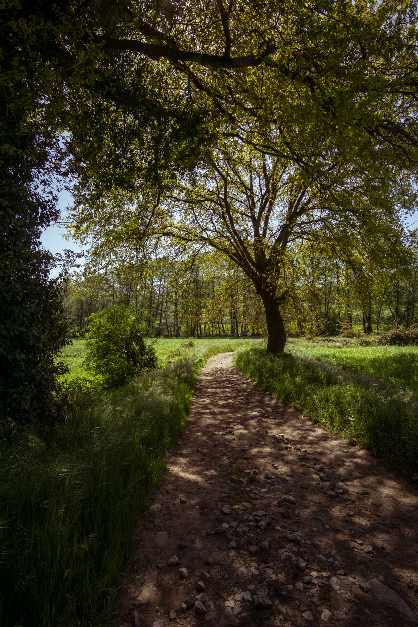 The Pilgrim's way