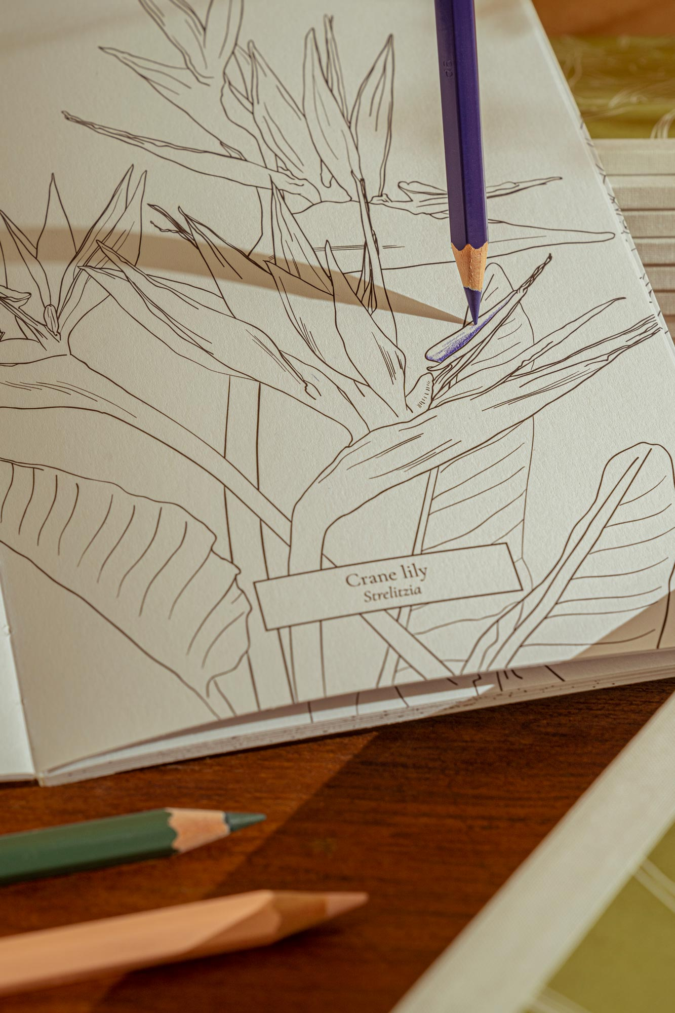 Botanical Colouring Book with Strelitzia