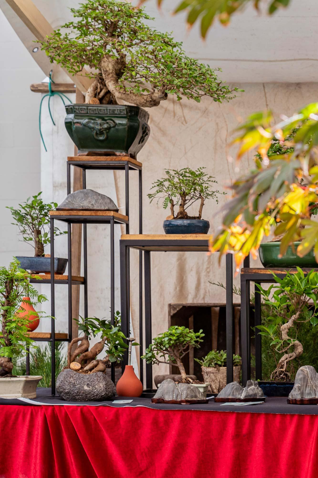 Bonsai trees at Green Days
